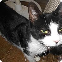 Adopt A Pet :: Cassie - Sanford, ME