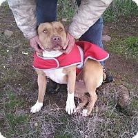 Adopt A Pet :: Mollie - grants pass, OR