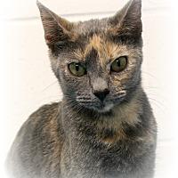 Adopt A Pet :: Faith Hill of