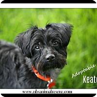 Adopt A Pet :: Keaton - Troy, MI