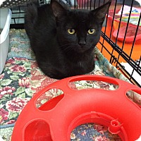 Adopt A Pet :: Mikey &Zoey - Clay, NY