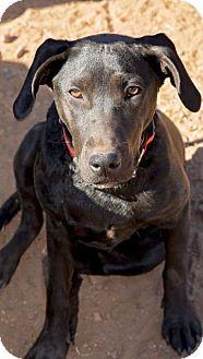 Labrador Retriever Mix Dog for adoption in Ball Ground, Georgia - Lady