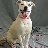 Adopt A Pet :: Vivvi - Newcastle, OK