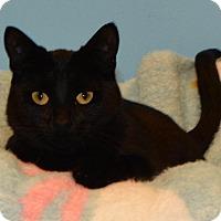 Adopt A Pet :: Georgette - Cincinnati, OH