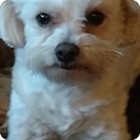 Adopt A Pet :: Madaline - San Diego, CA