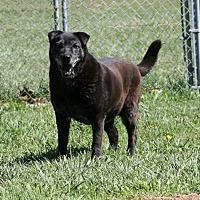 Adopt A Pet :: Ella - Fairfax Station, VA