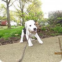 Adopt A Pet :: Sesame Street - Abby Cadabby - Akron, OH