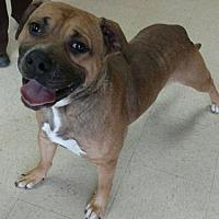 Adopt A Pet :: Al - Ashtabula, OH