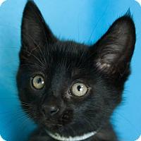 Adopt A Pet :: Kevin IV - Muskegon, MI