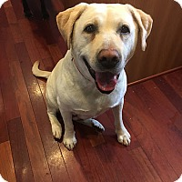 Adopt A Pet :: Angela - Yorktown, VA