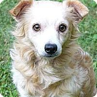 Adopt A Pet :: Marlowe - Mocksville, NC