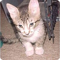 Adopt A Pet :: Lulu - Jenkintown, PA
