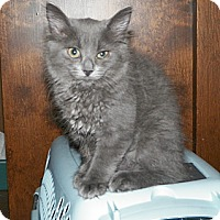 Adopt A Pet :: Katie - Dover, OH