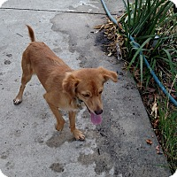 Adopt A Pet :: Sammy - Simi Valley, CA