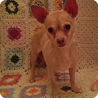 Adopt A Pet :: Mocha - Savannah, GA
