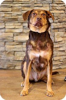 Labrador Retriever Mix Dog for adoption in Waldorf, Maryland - Hershey ADOPTION PENDING