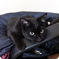 Adopt A Pet :: Cosmo* - Brooklyn, NY