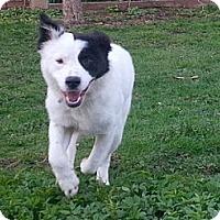 Adopt A Pet :: Riley - Hamilton, ON