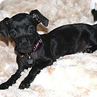 Adopt A Pet :: Maddie- updated video! - Temecula, CA