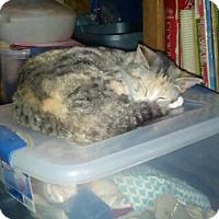 Adopt A Pet :: Luna - Mount Perry, OH