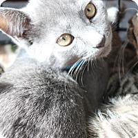 Adopt A Pet :: Elijah - Medina, OH