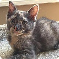 Adopt A Pet :: Bella (& Fluff) - Herndon, VA