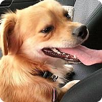 Adopt A Pet :: Linus-ADOPTION PENDING! - Sacramento, CA
