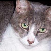 Adopt A Pet :: Nick - Melbourne, FL