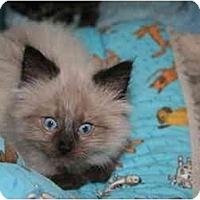 Adopt A Pet :: Zeus - Cincinnati, OH