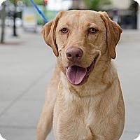 Adopt A Pet :: Charlie OS - Cumming, GA