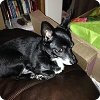 Adopt A Pet :: Chiquita - Seattle, WA