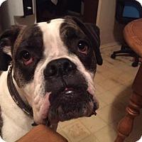 Adopt A Pet :: Otto - Saskatoon, SK