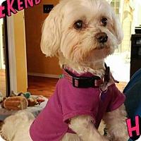Adopt A Pet :: Pedro - Covina, CA