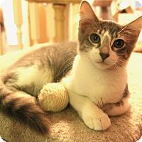 Adopt A Pet :: Sassy - Grand Prairie, TX