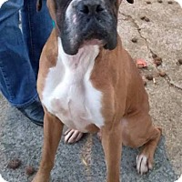 Adopt A Pet :: Henry - West Springfield, MA