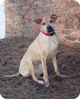 Shar Pei/Hound (Unknown Type) Mix Dog for adoption in Atlanta, Georgia - Eloise