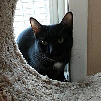 Adopt A Pet :: Jersey - Attica, NY