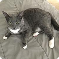 Adopt A Pet :: Pepper - El Dorado Hills, CA