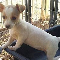 Adopt A Pet :: Huera's Jasmine - Las Vegas, NV