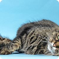 Adopt A Pet :: Mimi - Wyandotte, MI