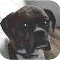 Adopt A Pet :: Maggie - Sunderland, MA