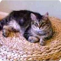 Adopt A Pet :: Bardot - Wakinsville, GA