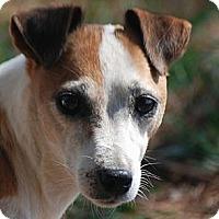 Adopt A Pet :: Sassy - Providence, RI