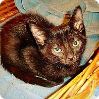 Adopt A Pet :: San Jose - Green Bay, WI