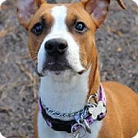 Adopt A Pet :: Ava - Tinton Falls, NJ