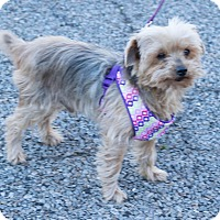 Adopt A Pet :: Beaux - Statewide and National, TX