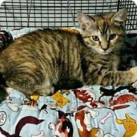 Adopt A Pet :: KAY - Ridgewood, NY