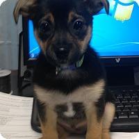 Adopt A Pet :: Hopper - Marietta, GA
