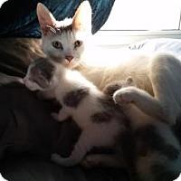 Adopt A Pet :: Crystal Rose - Hamilton, ON
