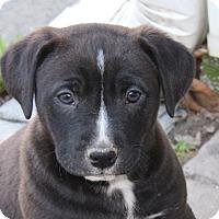 Adopt A Pet :: Waldo - kennebunkport, ME